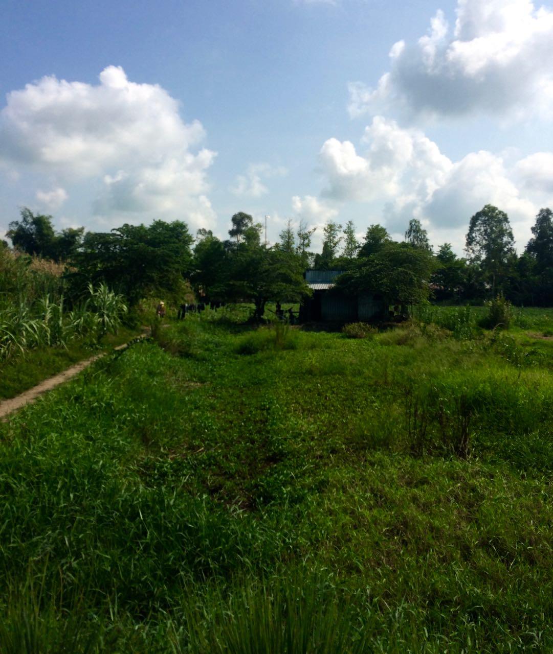 Cờ Đỏ District, Cần Thơ City, Vietnam (Photo: Sarah Allen)